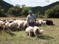 pastore-cane-pecore.jpg
