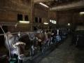 produzione-latte-mucca-umbria.jpg