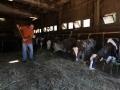 stalla-mucche-valnerina.jpg