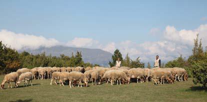 Azienda-Agricola-F.lli-Lanini