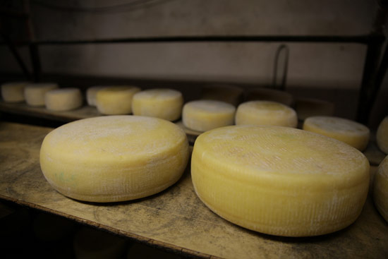 analisi-sensoriale-formaggi