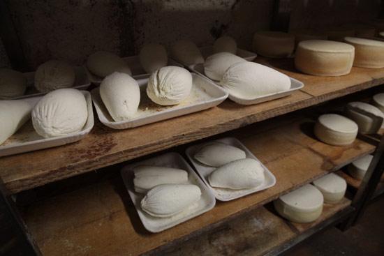 analisi-sensoriale-formaggio